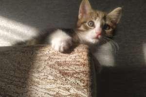 Объявление №40777 : Полосатый которебенок Тигра ищет дом